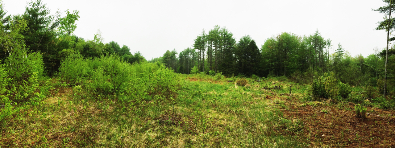 Forest Management - Woodcock habitat - Farmington